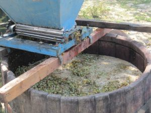 The grapes move through the zdrobitor on their way to a massive wooden barrel where they are then removed from their stems and juiced further.